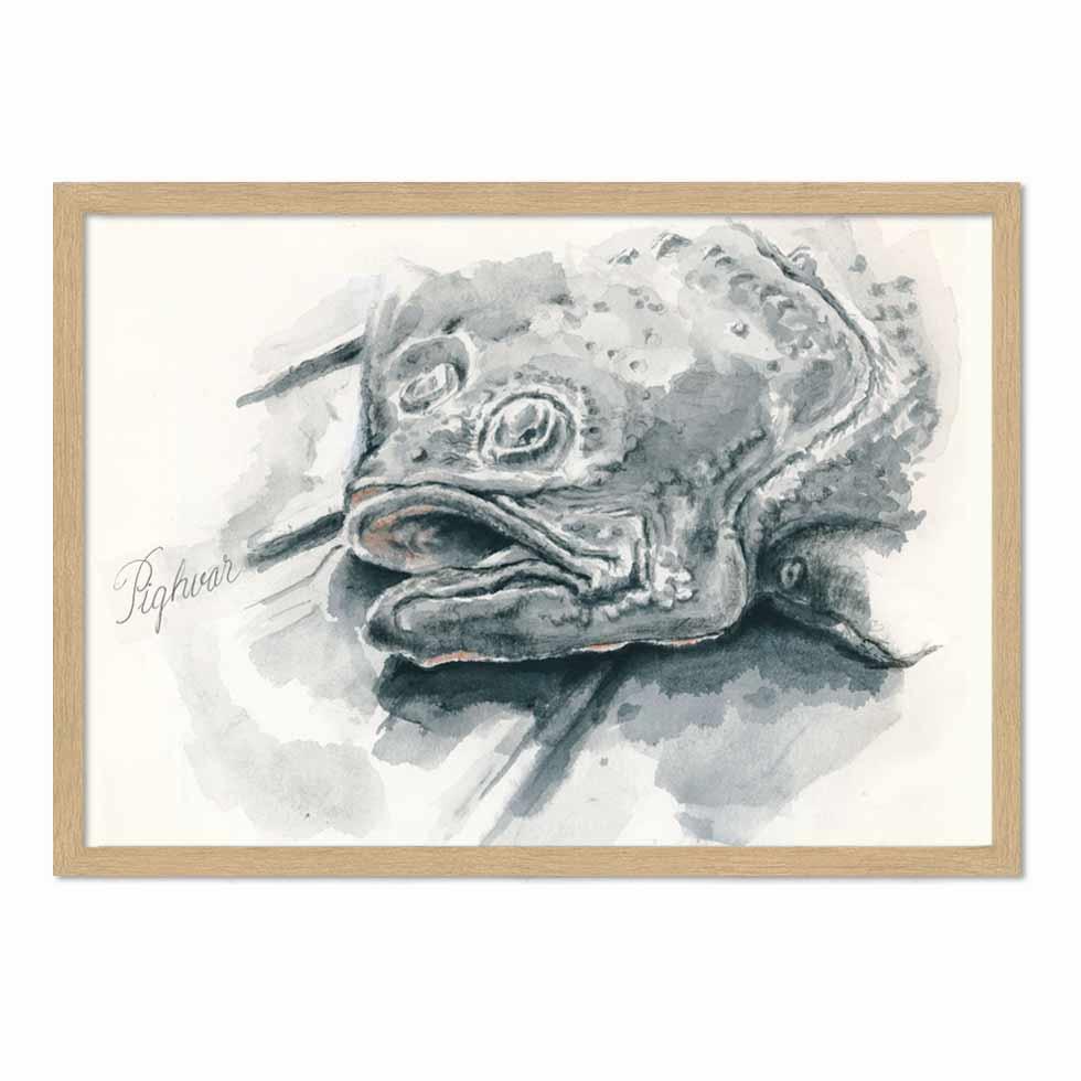 Pighvar – illustration