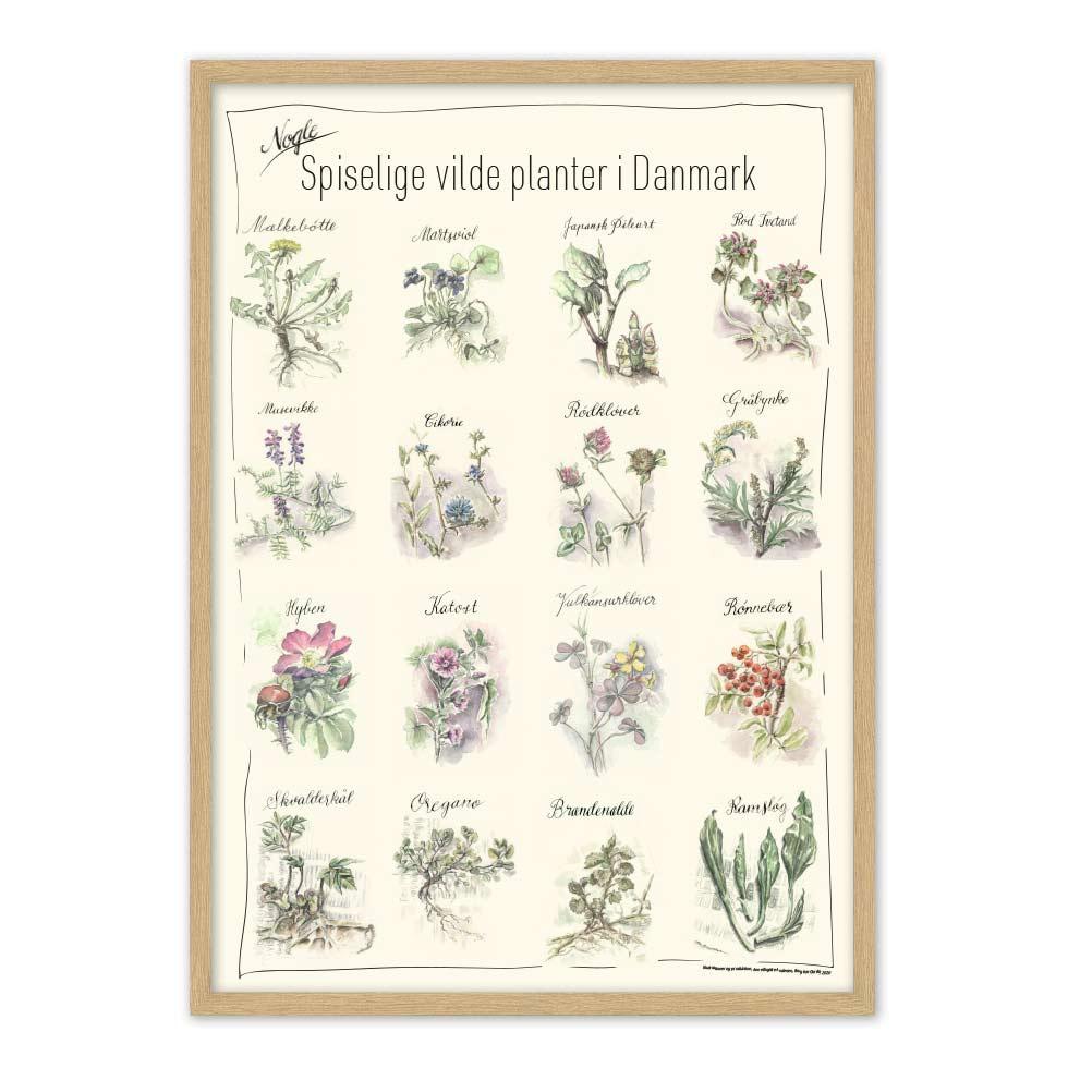 Vilde spiselige planter