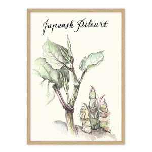 Japansk Pileurt